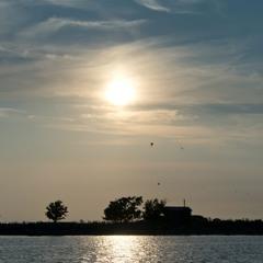 Sunrise with Herring Gulls - 15/7/2021 - Rayhat Reef