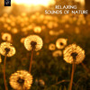September Song - Chillout Calm Music for Sleep Relajacion y Meditacion