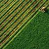 Прогнозируем, что после открытия рынка земли стоимость гектара составит $1,5-2 тысячи — Дмитрий Ливч
