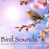 Buddhist Meditation in Music (Birds)