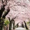 Download Akebono Shirabe Mp3