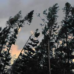 Storm in my Backyard - 19/11/2020 - Makholma Finland