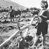 đưa cơm cho mẹ đi cày - ngọc thoa (thu thanh 1971)
