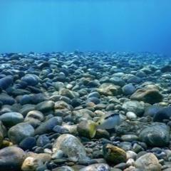 Underwater Rocks in the Tide | Hydrophone Field Recording