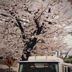 Blossom ft Korusai