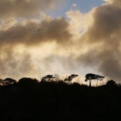 Birdland