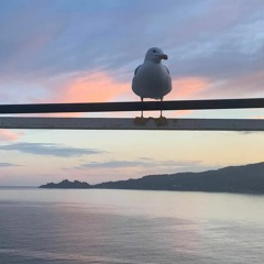Honky Tonk Seagull