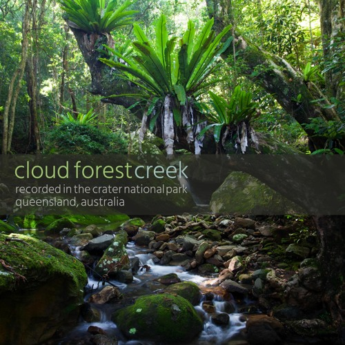 """Album """"Cloud Forest Creek"""" - 48 minute Recording from Mt Hypipamee NP, QLD, Australia"""