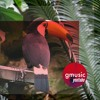 Blackpink - How You Like That Remix Dance Club Edm Summer 2020 gmusic youtube remix mashup
