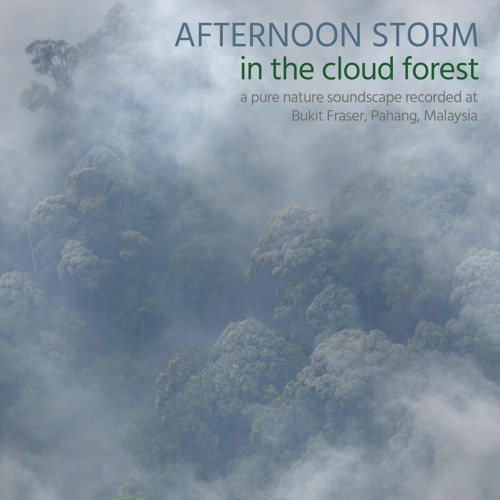 Afternoon Storm in the Cloud Forest (Album Sample)