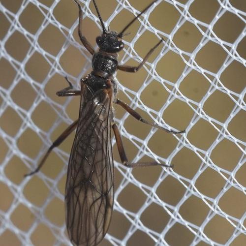 Stonefly Parade (feat. The Plecopteran Quintet)