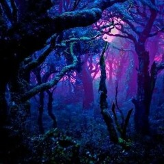 Enchanted Forest streaming Series