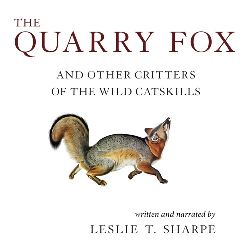 The Quarry Fox sample