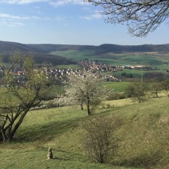 A walk in the woods in Thuringia, April 2020