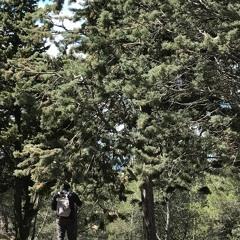 Ecouter les arbres _ Atelier de la Médiathèque de Châteaurenard