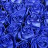 Frequenz - Синие розы (Gearing Remix)
