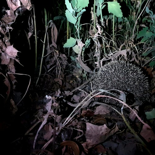 wolf spider chorus. yarnaz valley, xinjiang