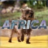 Africa - Toto Cover - DEMO VERSION