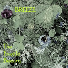 """THE SIREN`S SONG  from """"THE FRAGILE BEAUTY"""""""