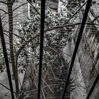 Between The Bars - Elliott Smith - Cover