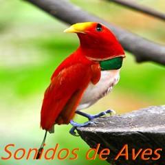 Ave Serinus Canaria