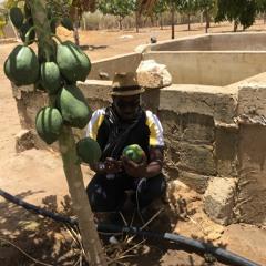 Pandémie du COVID-19 : Célébrer les héros de l'alimentation