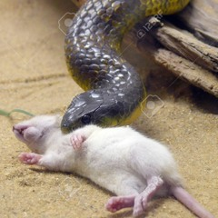 SnakesandratsInstbpm144  #horcruxbeats