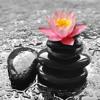 04. Chrysanthemum