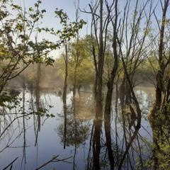 Morning in the floodplain forest 15.05.2021