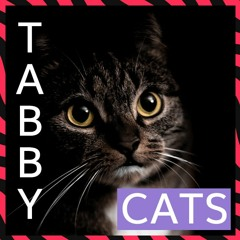Catastic - Interesting Tabby Cat Facts