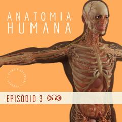 ANATOMIA: Movimentos e variação anatômica