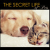 Relaxing Song for Cat & Dogs