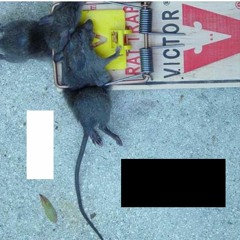 210725 Insurrection Blues o Ratas de Dos Patas