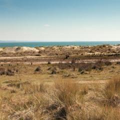 Shell Bay View - Dune Dynamics Echo