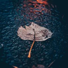 Seasons - yngfraser