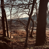 """East Wood """"Revisited"""" - Ashdown Forest - Dawn Chorus Ambient"""