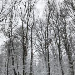 snow day (demo)