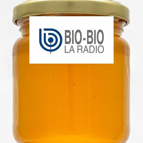 """Entrevista Radio Bío Bio """"Aumenta el consumo de miel en pandemia"""""""