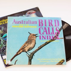 Dr Kate discusses the John Hutchinson Birdsong Collection