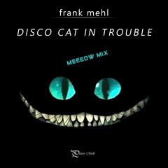 Disco Cat In Trouble