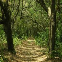 Sonidos del Bosque para Relajar
