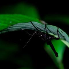 Night in the Amazon jungle