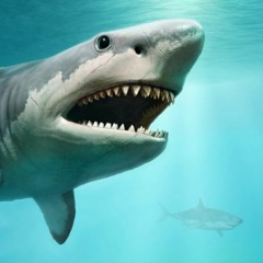 track zero: anthony shark