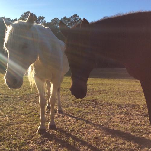 Cheyenne: Audio-Essay about a Horse