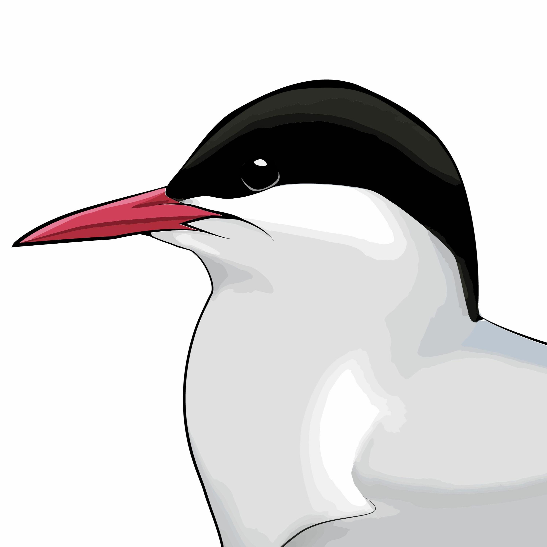 33: Från sångfåglar till silvertärnor