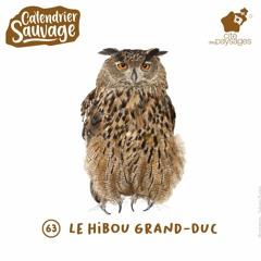 Audiofocus - Le hibou grand-duc