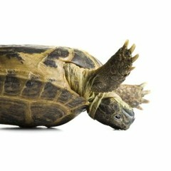 Topsy Turvy Turtle - for steel band