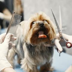 Best Dog Grooming Center in Dubai