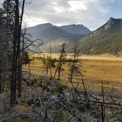 Middle of the Elk Rut -- Rocky Mountain National Park