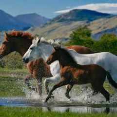 horse family runnin round' +Bootleg baby (rapallo)